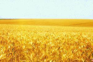 Агрокультура Agrokultura назвала самые рентабельные культуры agrokultura