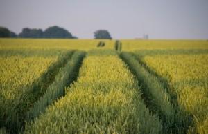 zemlya-v-ukraine-ne-budet-stoit-dorozhe-1000-dollarov Эксперт Земля в Украине не будет стоить дороже 1000 долларов США за гектар
