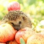 19 августа Яблочный Спас что нужно знать о празднике
