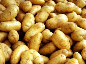 Характеристика сортов картофеля