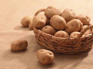 Озвучені перші прогнози урожаю картоплі 2017 року