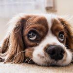 Что думают о нас собаки когда Мы улыбаемся