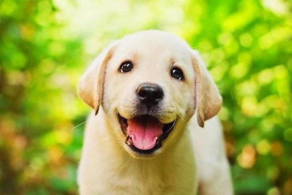 Год Собаки 2018 года и Украина астролог пообещал особую ситуацию