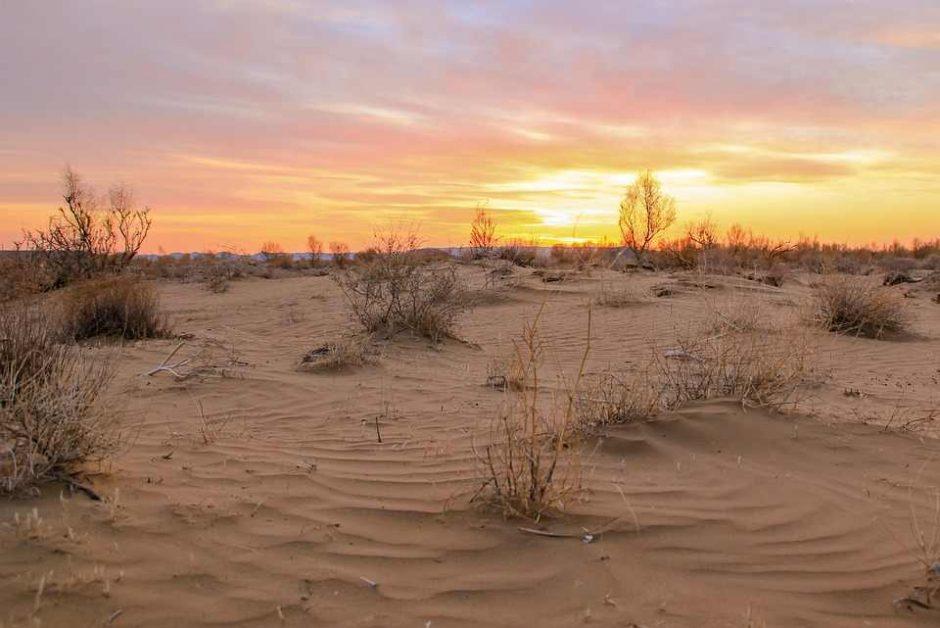 Пісок і кактуси Україна перетворюється на пустелю