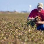 Украина экзотическая из за перемен климата фермеры начинают выращивать нестандартные культуры