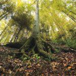 21 марта Всемирный день защиты лесов где на Земле еще сохранились живые современники древнего мира