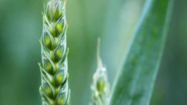 Каким будет урожай 2019 года эксперты дали прогноз в связи с начавшейся посевной