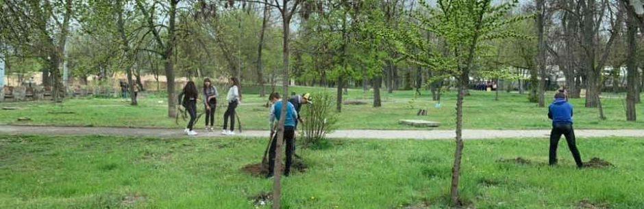 В Херсоне и области посадили более 2,5 тысяч дубов
