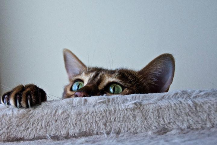 Покупка корма для кошек Hills