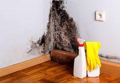 Грибок в будинку - причини способи боротьби